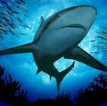 picture of shedd aquarium