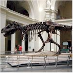 picture of the field museum